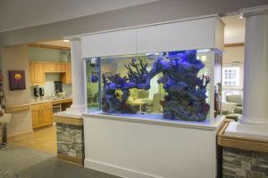 Fish tank in Woodbury Facility